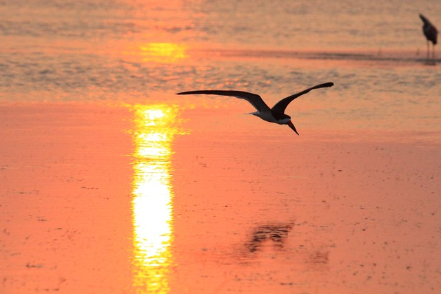 Sunset Skimmer