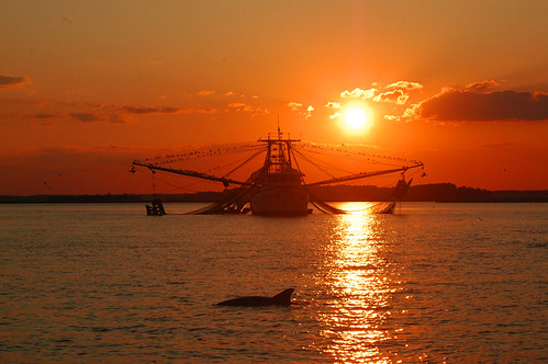 sunset dolphin savannah daufuskieisland shrimpboat hiltonheadisland armstrongatlanticstateuniveristy armstrongmhsa