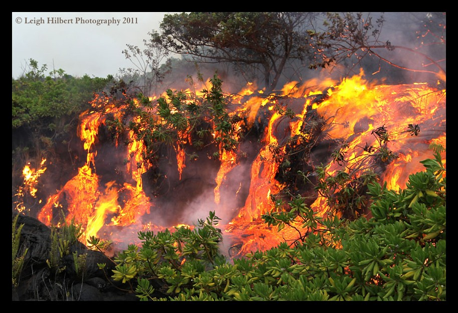 Jungle River of Fire  ...