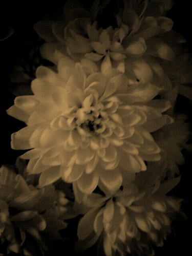 101/365 Vintage Flowers | by Hexagoneye Photography