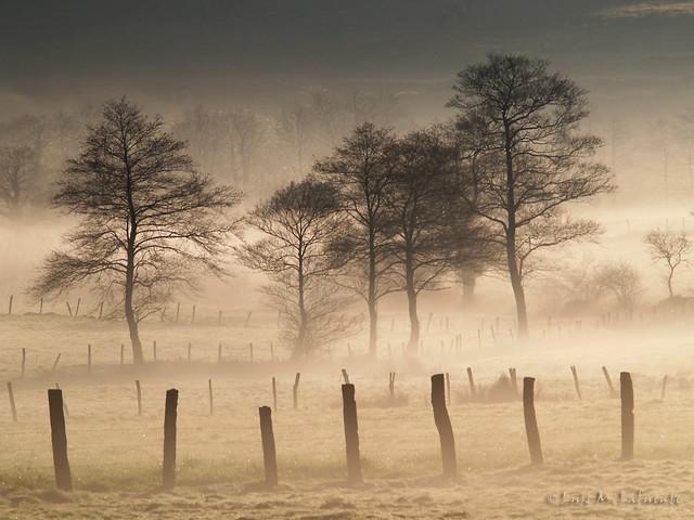 AMANECER CON NIEBLA  - SUNRISE IN THE FOG
