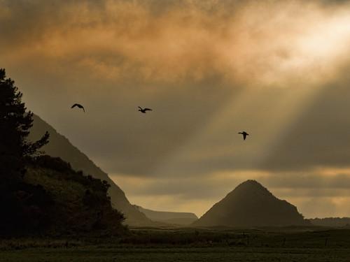 new sunset real cloudy ducks zealand otago dunedin pyramids peninsula