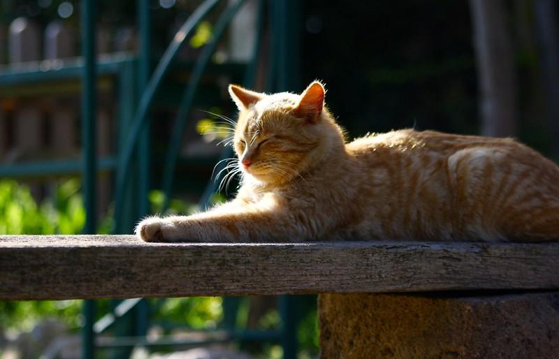 Colonia felina