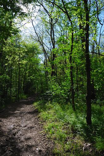spring hiking gsa ozarks whitetrail nikond40x journal2011 busiekstateparkandwildlifearea