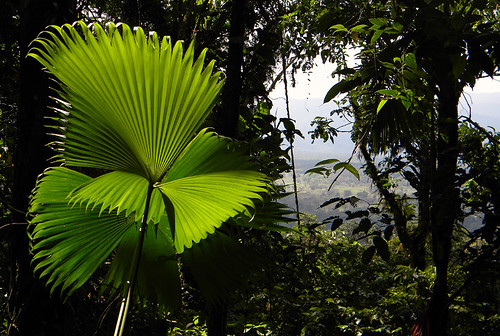 perfect light in a Costa Rican jungle