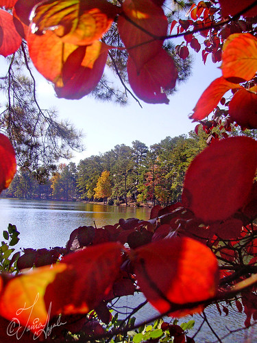 autumn lake tree fall nature