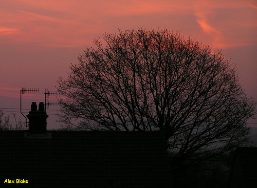chimney tree ariel silhouette sunrise