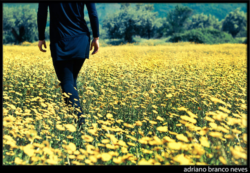 flowers yellow oscarwilde nikond300 adrianobranconeves
