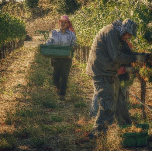 """Vineyard Workers"" | by Maureen Clark Photography"
