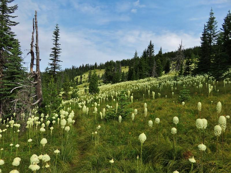Beargrass Meadow
