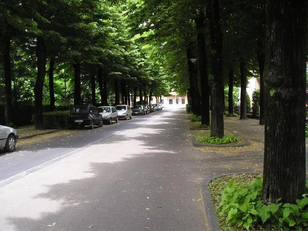 Polemiche sull'abbattimento dei tigli del Viale Cairoli: la posizione del Comitato Ambiente e Paesaggio a Castel Bolognese