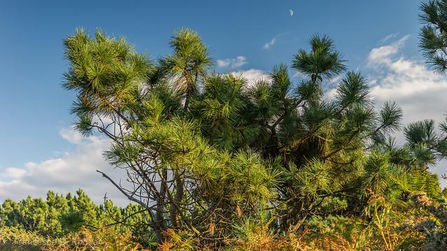 trees, Luanco-825