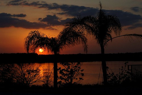 family trees sunset vacation sky orange lake reflection nature water orlando florida palm msoller