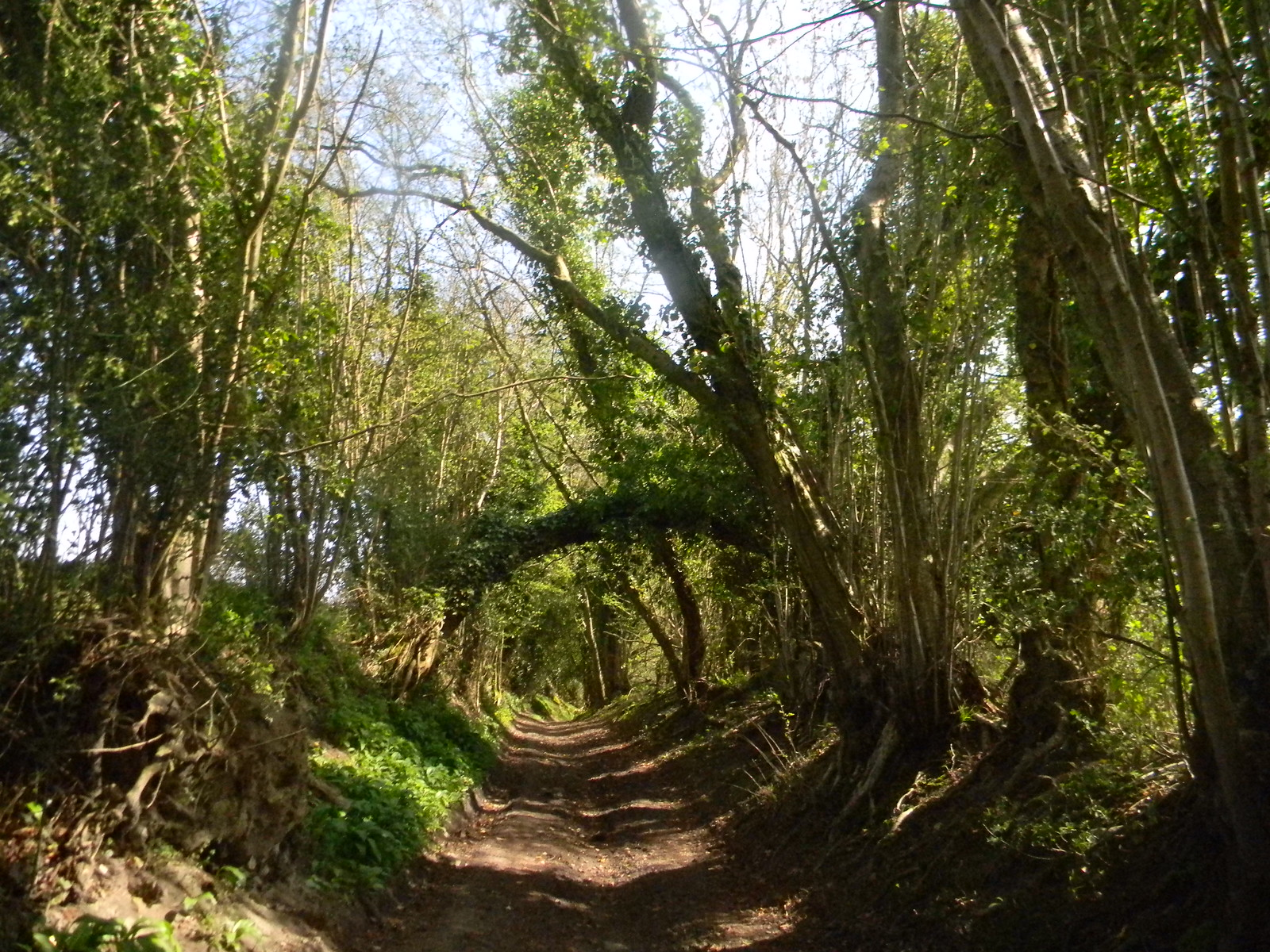 Bridleway Petersfield to Liss