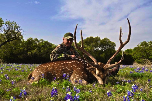 Axis | by Hunting Texas Trophies | VBHARRE Ranch