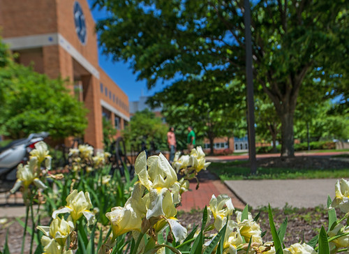Irises frame the view of the Engineering's Building's south entrance on a lovely spring afternoon. (Photo/D.L. Turner)