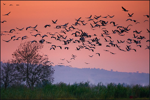 life nature birds animals sunrise israel hulavalley