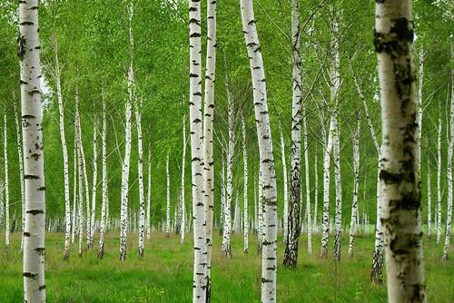 color colour tree forest