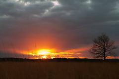 Last of the Sun
