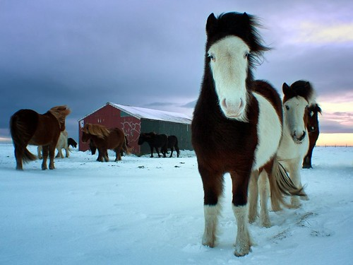 Horses in the Snow ng | by My Positive Thoughts on Life