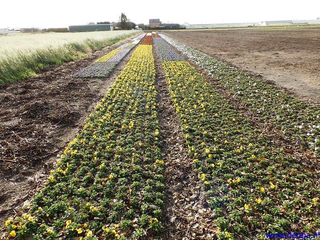 09-11-2013          Beverwijk      23.5 Km  (23)