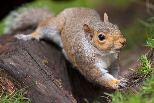 Squirly Squirrel | by Andy M Taylor