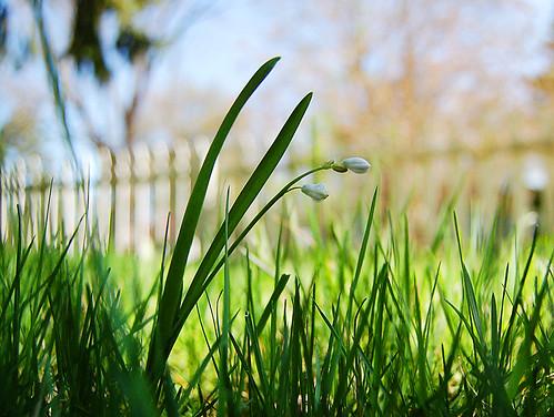 flowers spring munithmi