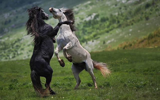 Most Beautiful Horse Wallpaper And Backgrounds Free Downlo Flickr