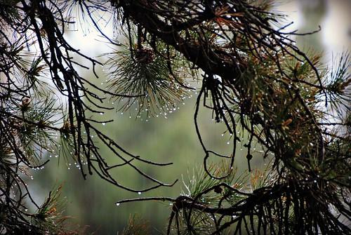 trees roof storm rain may explore quotes raindrops queensburyny