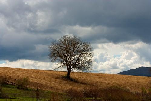 calm storm tree field clouds hills abruzzo aq it ngc day flickrdiamond
