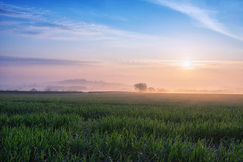 light mist misty sunrise landscape dawn nikon nikkor warwickshire d610 alcester coldcomfort dawnmist 1635mmf4 jactoll nikonfxshowcase