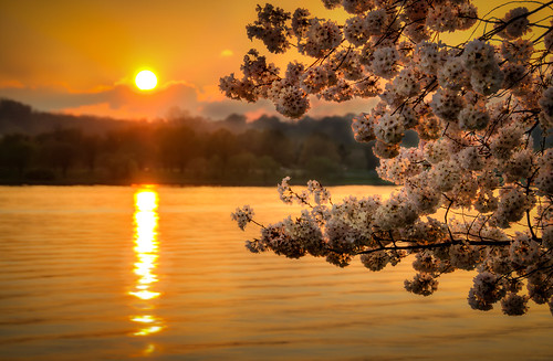 trees light sunset sky usa sun reflection sunshine yellow river cherry photography golden evening us warm noir sundown blossom dusk unitedstatesofamerica skynoir