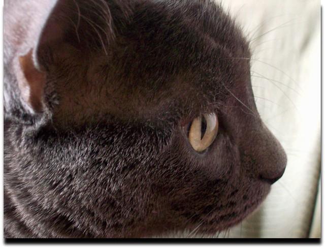 Cat concentration-Cica koncetnrálás