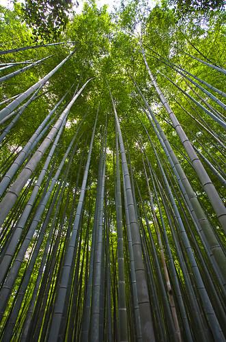 Bamboo skyscrapers