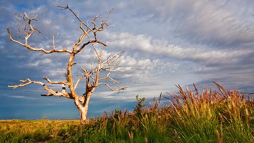 light color tree grass clouds sunrise landscape hawaii scenic bigisland drama saddle puuanahulu 22332 vogfree