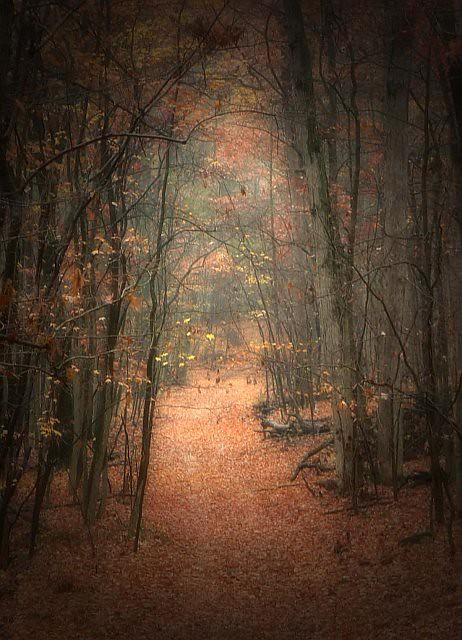 Through the wood