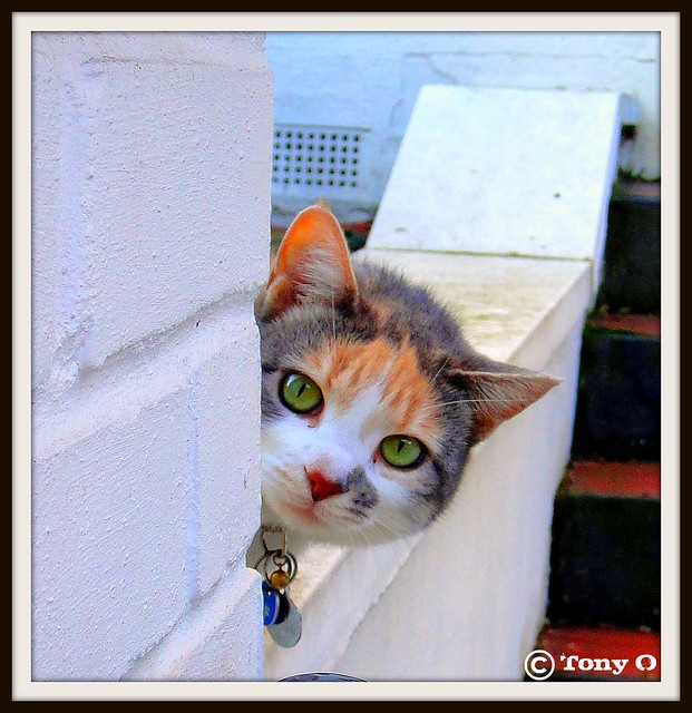 Cute Cat ..... Saying Hello