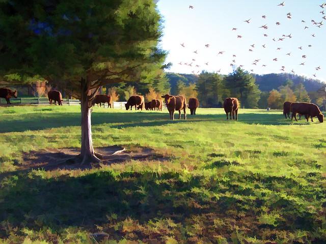 When the cows come home...