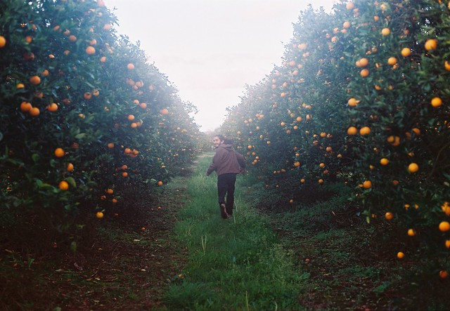 Freedom in the orange grove.