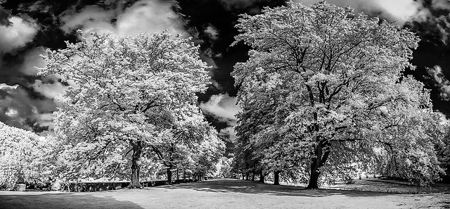 The Avenue at Gibside