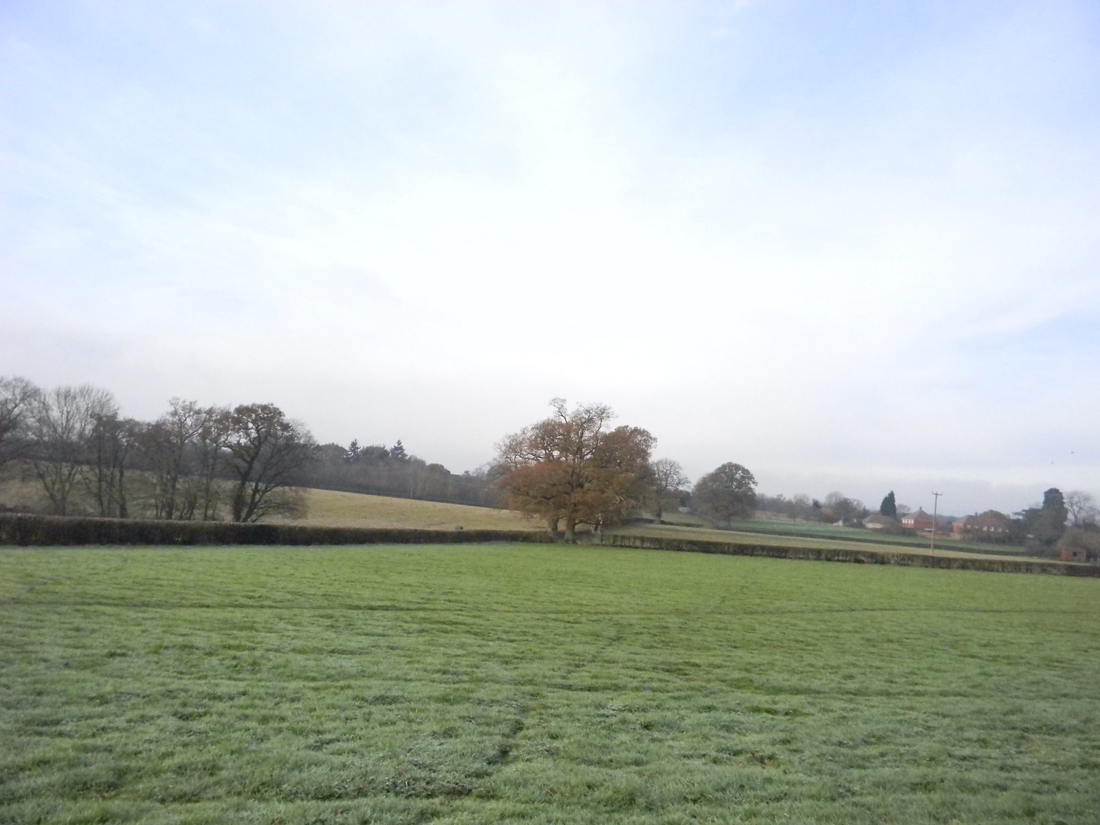 Frosty field Ockley to Warnham