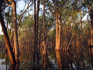 Rio Urubu Early Morning | by treegrow
