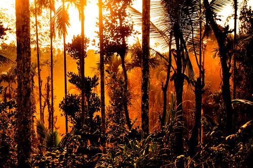 misty morning happynewyear goodmoring wayanad kerala india challiyan d90 crepuscularrays rays sun sunshine arecanut areca chalksy camerocks camerockscom amazing stunning talented bestphotos brilliantshots brilliance greatshots greatpictures picturesforsale awesomepics awesome vipincp vipin awsome awesom awespme graet stuning mice superb siperb keralam cultural topphotos specialphotos thrissur trichur cochin kochi