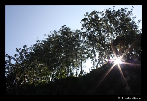 trees sun black silhouette sunrise star starburst