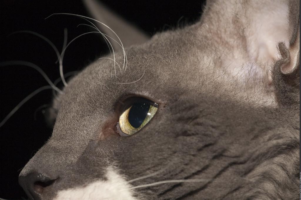 амулет кошка