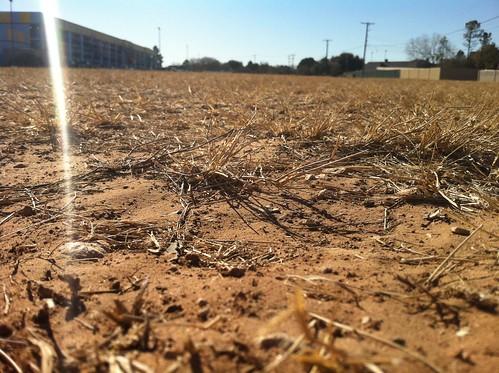 park brown green field grass texas desert