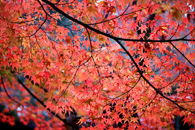 foliage curtain