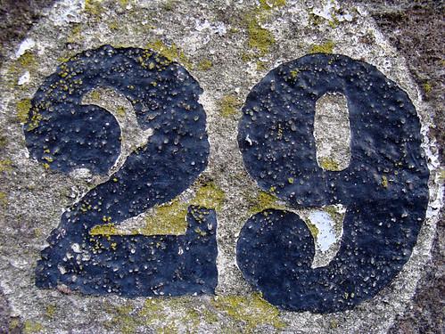 No 29 - lichen | by kirstyhall