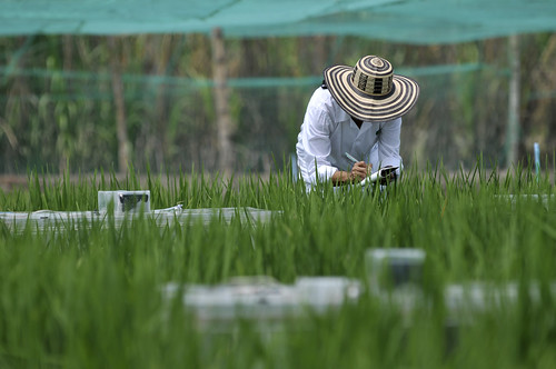 NP_Rice Emissions13 | by CIAT International Center for Tropical Agriculture
