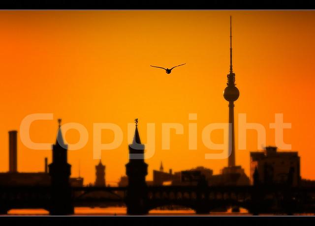 Lonely Duck over Berlin